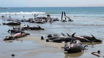 Namibië onderzoekt mysterieuze dood van 86 dolfijnen