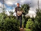 In Deventer kun je straks misschien een kerstboom huren