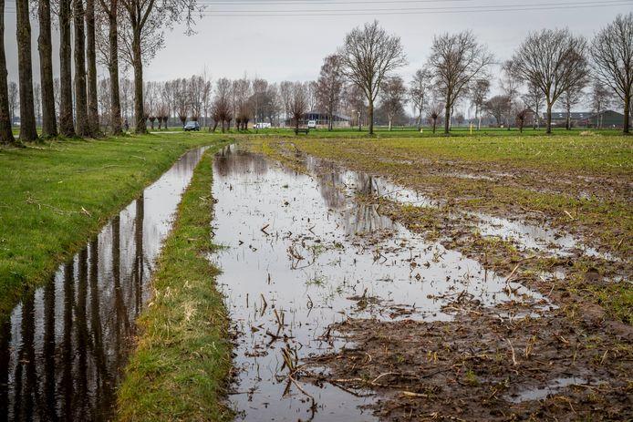 Hevige regenval in Gemert zorgt voor overlast in een weiland. Het Waterschap legt belangrijke aanpassingen van het watersysteem vast. Archieffoto DCI Media