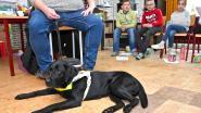 Dopjes inzamelen ten voordele van Belgisch Centrum voor Geleidehonden