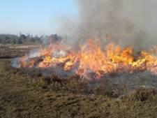 Heidevelden Sallandse Heuvelrug staan vanmiddag in brand