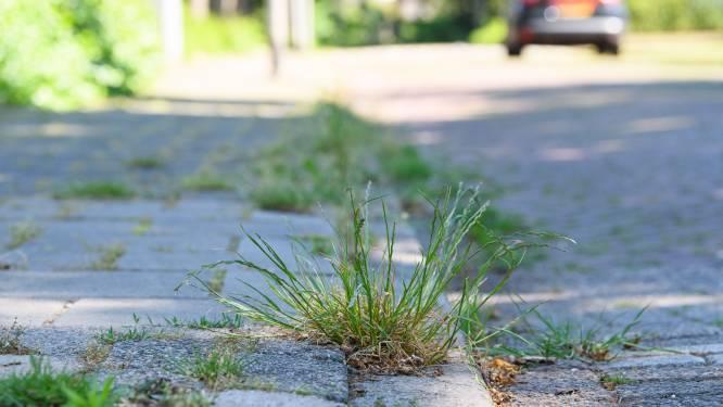 Heeze-Leende: onkruid op trottoir moeten we accepteren