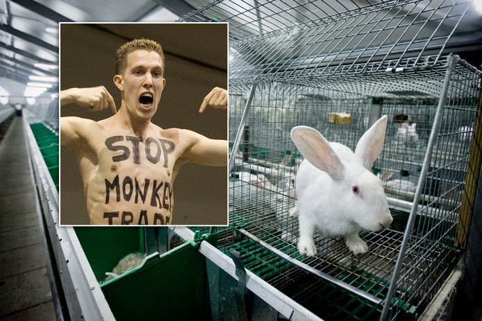 De 'vegan streaker' (inzet) ging zonder toestemming een konijnenfokkerij binnen. Foto op de achtergrond ter illustratie.