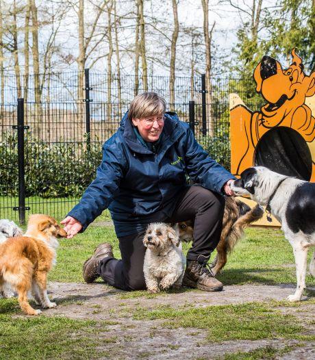 Twentse pandemiepuppies en coronahonden: 'Je moet niet de hond opvoeden, maar het baasje'