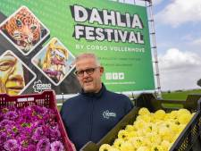 Dankzij 300 vrijwilligers heeft Vollenhove een coronaproof dahliafestival
