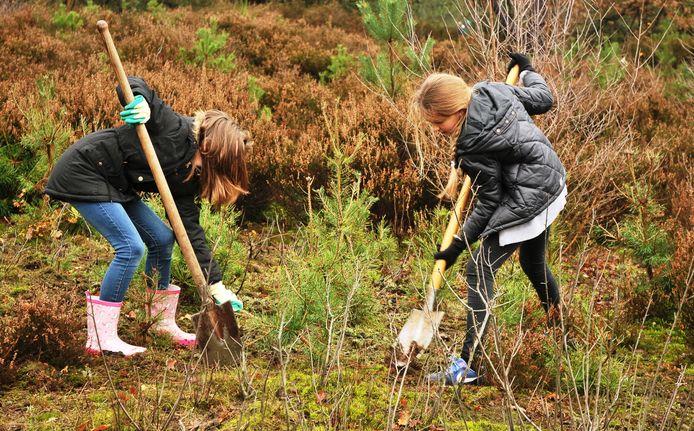 Het verwijderen van bomen tijdens de kerstboomactie, komt de natuur ten goede.