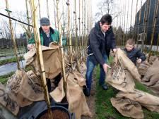 Drie generaties Verwoerdt samen aan het werk in de boomkwekerij