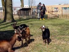 Knuffelen, aaien en voeren op kinderboerderij Kerkebogten in Eersel