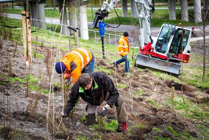 De aanleg van het 'Tiny Forest' in de Schiedamse wijk Groenoord, eerder dit jaar.