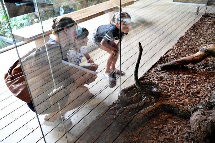 De netpython, een van de gevaarlijkste reptielen op aarde, bij Reptielenhuis De Aarde in Breda.