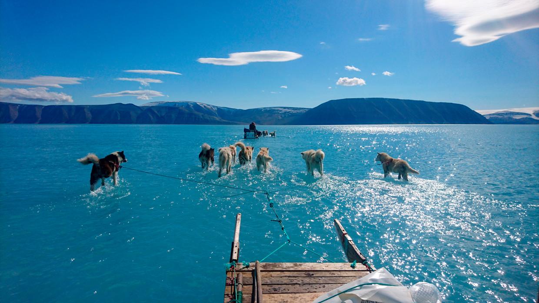 Sledehonden van Deense klimaat- onderzoekers lopen in Groenland door smeltwater. Normaliter begint het smeltwaterseizoen in juni, maar dit jaar al in april, zeggen de Denen.  Beeld AP