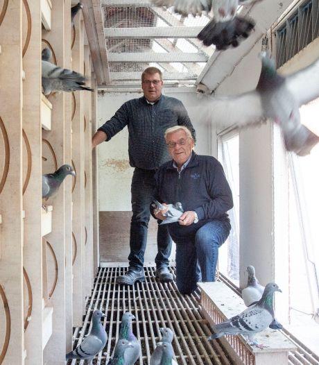 Vader en zoon uit Stokkum met duivenhobby kronen zich tot Nederlands kampioen: 'Je bent er gek mee'