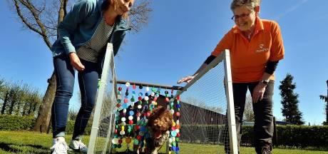 Drukte bij hondenscholen: 'Twee keer zoveel pups als normaal'