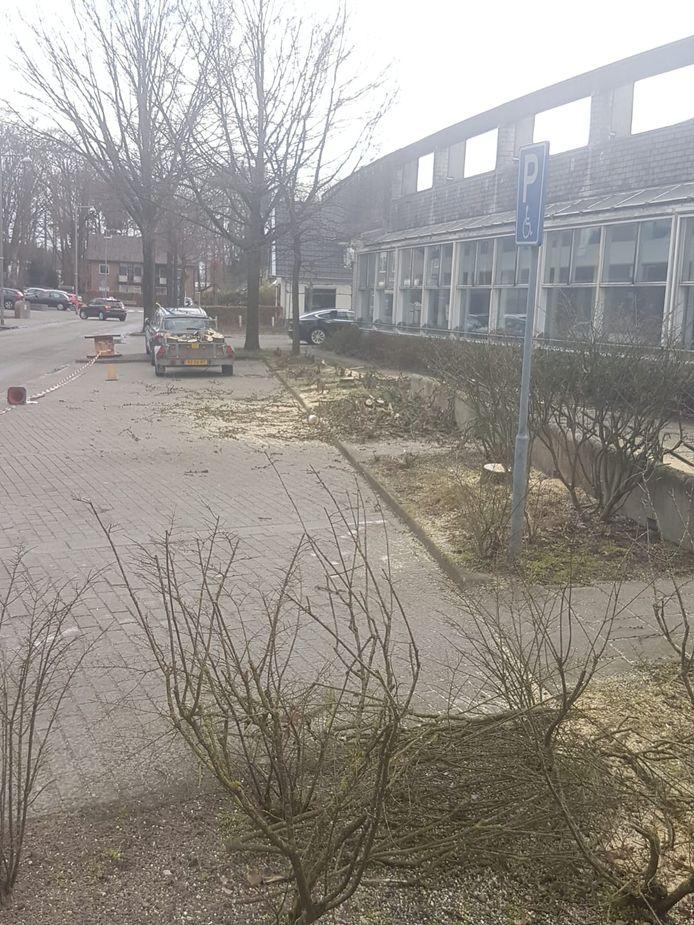 Aan de Molecatenlaan in Ugchelen zijn enkele bomen gekapt. De vraag is of dat mocht?