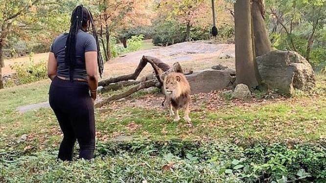 """Dierentuin woest op dansende vrouw die leeuw treitert: """"Ze had dood kunnen gaan"""""""