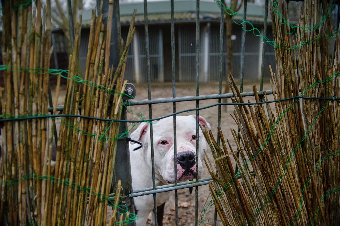 Hond Bosse is nog een van de weinige honden in het dierentehuis aan de Oosterplas in 's-Hertogenbosch