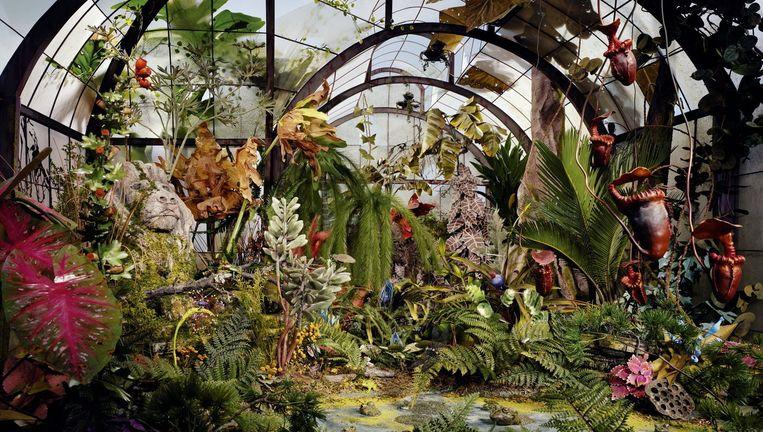 Beeld uit de expo 'Lori Nix, The Power of Nature' in Museum Schloss Moyland in Bedburg-Hau in Duitsland. De Amerikaanse kunstenares (°1969) onderzoekt in haar werk wat er gebeurt met de wereld als de mens er plotseling uit zou verdwijnen. Beeld © Lori Nix