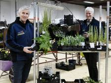 Planten sorteren, inpakken en versturen, dat doen ze bij Heutinck nu aan de Needseweg