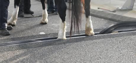 Gemist? Politie maakt eind aan illegaal feest en paard komt klem te zitten op fietsbrug