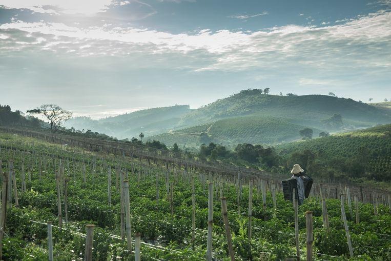 Noiva do Cordeiro ligt in de groene heuvels van deelstaat Minas Gerais. Krekels maken volop herrie, voorts ademt het dorp serene rust. Beeld Marlena Waldthausen