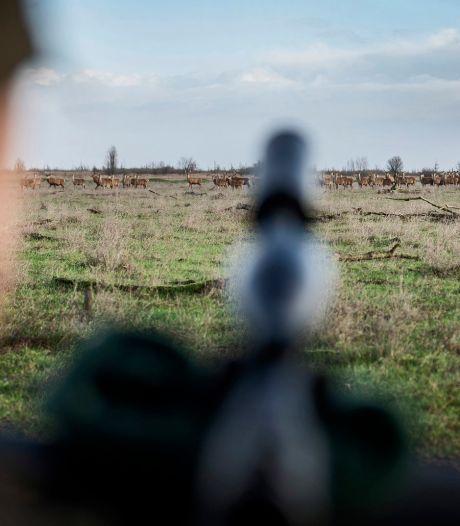 Ruim 1400 grote grazers afgeschoten in Oostvaardersplassen (maar dat is lang niet genoeg)