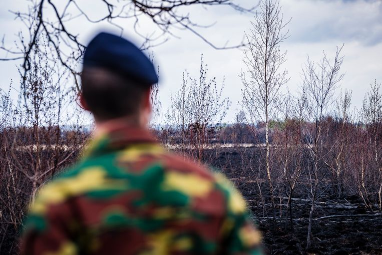De schade in Brecht is niet te overzien. Oorzaak is het verkeerd gebruik van kogels door militairen. Beeld Gregory Van Gansen / Photo News