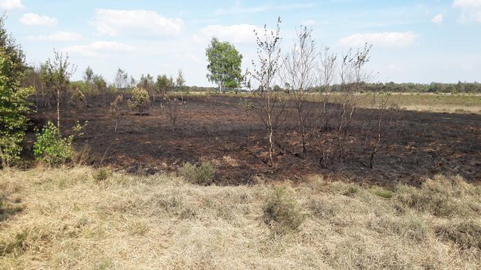 Een stuk zwartgeblakerde Strabrechtse Heide is wat resteert na de aangestoken brand.