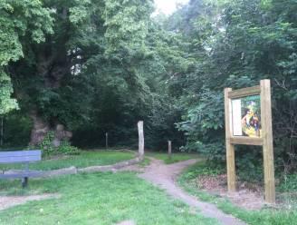 Volgende week bomenkap in buurtbos 't Kapelleke