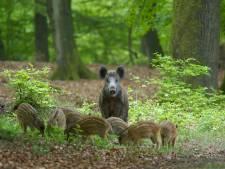 Wilde dieren komen terug en gaan op ontdekkingsreis in Zuidoost-Brabant