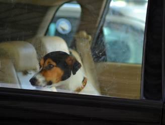 Wat mag je doen als een hond opgesloten zit in een snikhete auto? En hoe bezorg je het dier verkoeling?