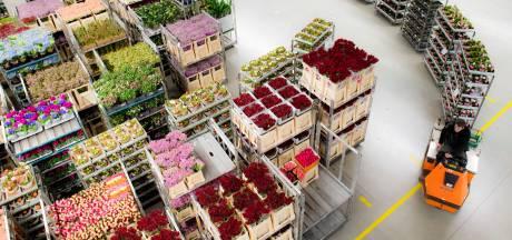 Plantion ziet in coronajaar omzet stijgen en vernieuwt veilingzaal
