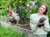 """Graag kippen in je tuin? Onze tuinexperte legt uit hoe je dat het best aanpakt: """"Wees zuinig met maïs en richt hun hok op het oosten"""""""