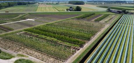 Verdringen bomenakkers het Betuwse fruit?
