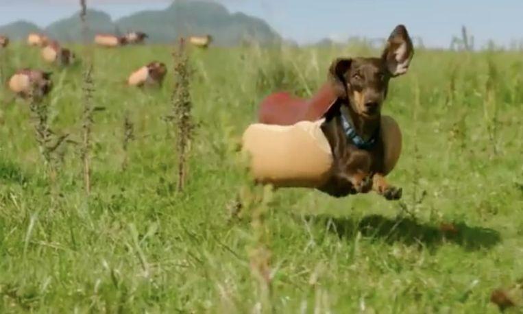 Deze teckeltjes stelen de show in de Heinz Super Bowl-commercial