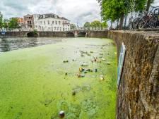 Binnenstad Delft is extreme kroosmassa in grachten zat