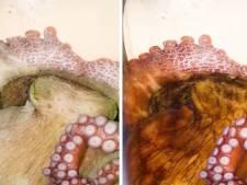 Les pieuvres changent de couleur et de texture pendant leur sommeil