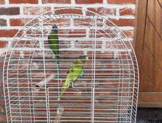 Politie CARMA neemt opnieuw 245 verwaarloosde dieren in beslag bij eigenaar in Bocholt
