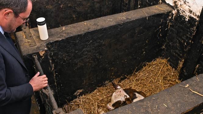 Minister doopt pasgeboren kalfje in Ruiseleedse gevangenis prompt tot 'Quicky'