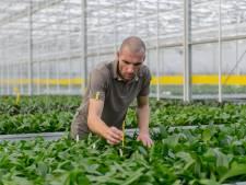Haagse werklozen krijgen baantje in Westland: 'Maar alleen mensen die gemotiveerd zijn'
