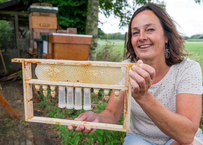 Winny de Ruiter met een raam met tien nicotdoppen waarin de koninginnelarven zitten, om vier doppen heeft ze arrestkooitjes geplaatst. De stukjes raat op de doppen heten 'moeren'.