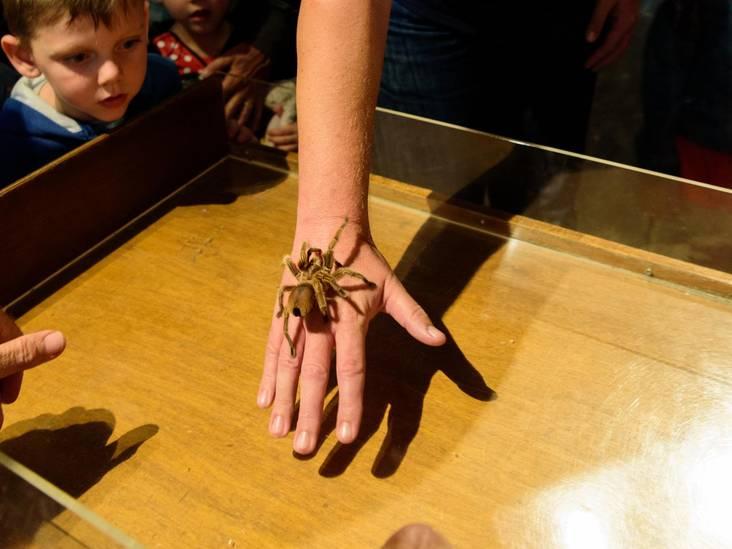 De tedere touche van de tarantula