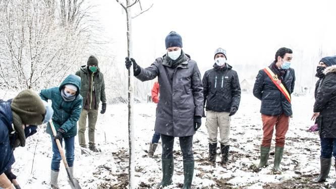 """""""Ondoordacht en absurd"""": premier Alexander De Croo en minister Tinne Van der Straeten planten bomen in koudste week van het jaar"""