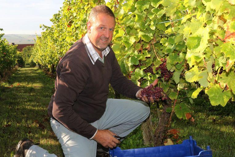 Wijnbouwer Edward Six van domein Monteberg toont trots de oogst.