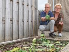 Minister Bruins: 'politie heeft wietplanten terecht weggehaald bij Jan en Jannie uit Hasselt'