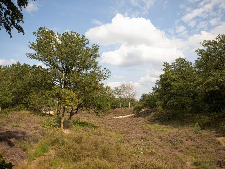 'Variatie is het toverwoord in de bossen van Lage Vuursche'