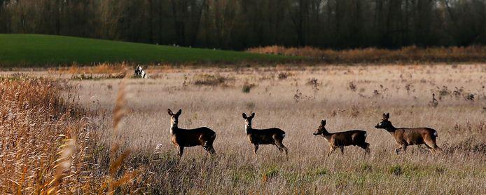 De Biesbosch.