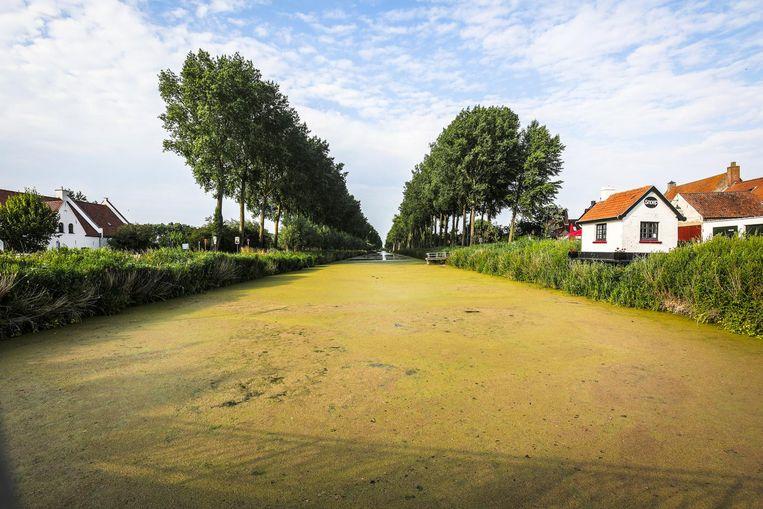 De waterplant geeft de Damse Vaart een helgroene kleur.