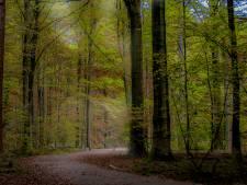 La Flandre est l'une des régions les plus pauvres en forêts d'Europe
