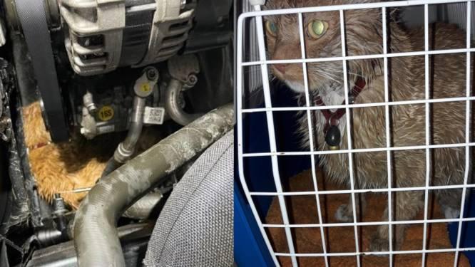 Nachtmerrie voor kattenbaasjes: Sky 'compleet doorweekt' met olie en koelvloeistof na rit onder motorkap