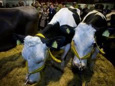 Mogelijk veevoer met dioxine in Nederland